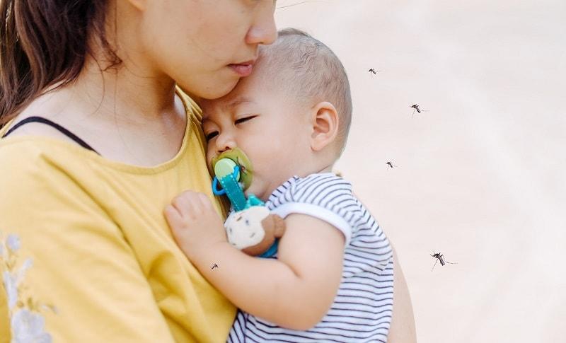 Muỗi Culex là con đường trung gian lây truyền bệnh viêm não Nhật Bản