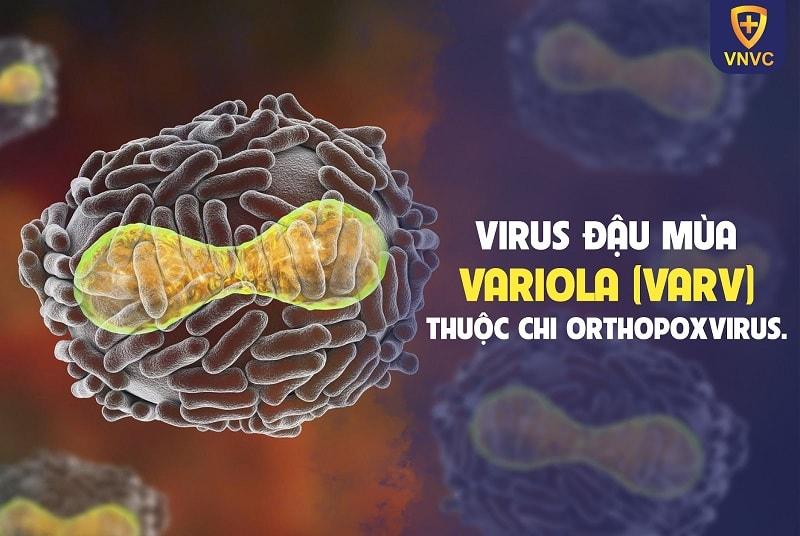 Virus đậu mùa