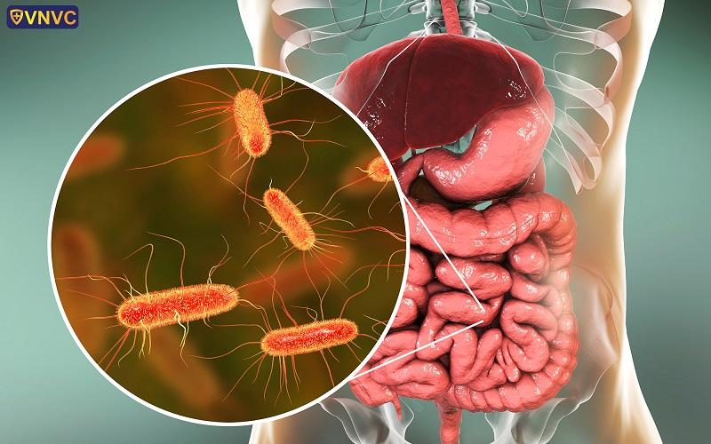 Nhiễm trùng đường tiểu: Nguyên nhân, triệu chứng, biến chứng và cách phòng ngừa – Công ty Cổ phần Vacxin Việt Nam