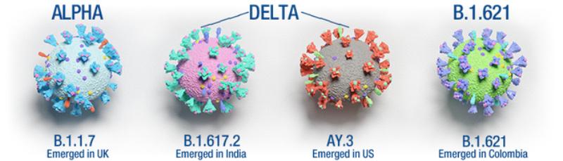 các biến thể virus corona
